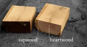 Sapwood and heartwood