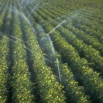 Sprinkler Irrigation | Advantages and Disadvantages of Sprinkler Irrigation System