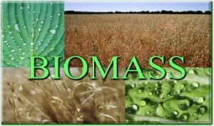 Biomass | Advantages and Disadvantages of Biomass