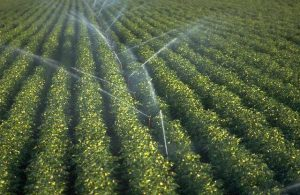 Irrigation | Advantages and disadvantages of Irrigation